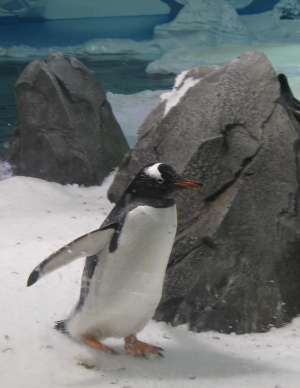 [The Pinguin]